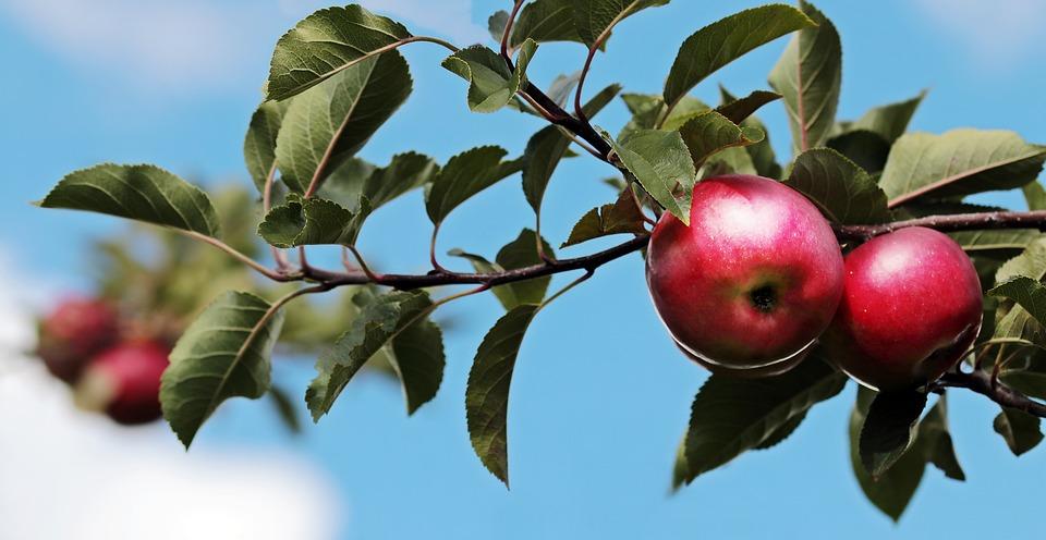 Święto Jabłka w Parku Miejskim