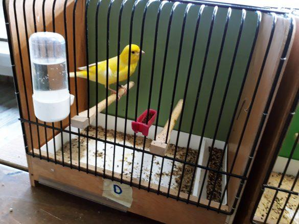 Zdjęcie kanarka w klatce