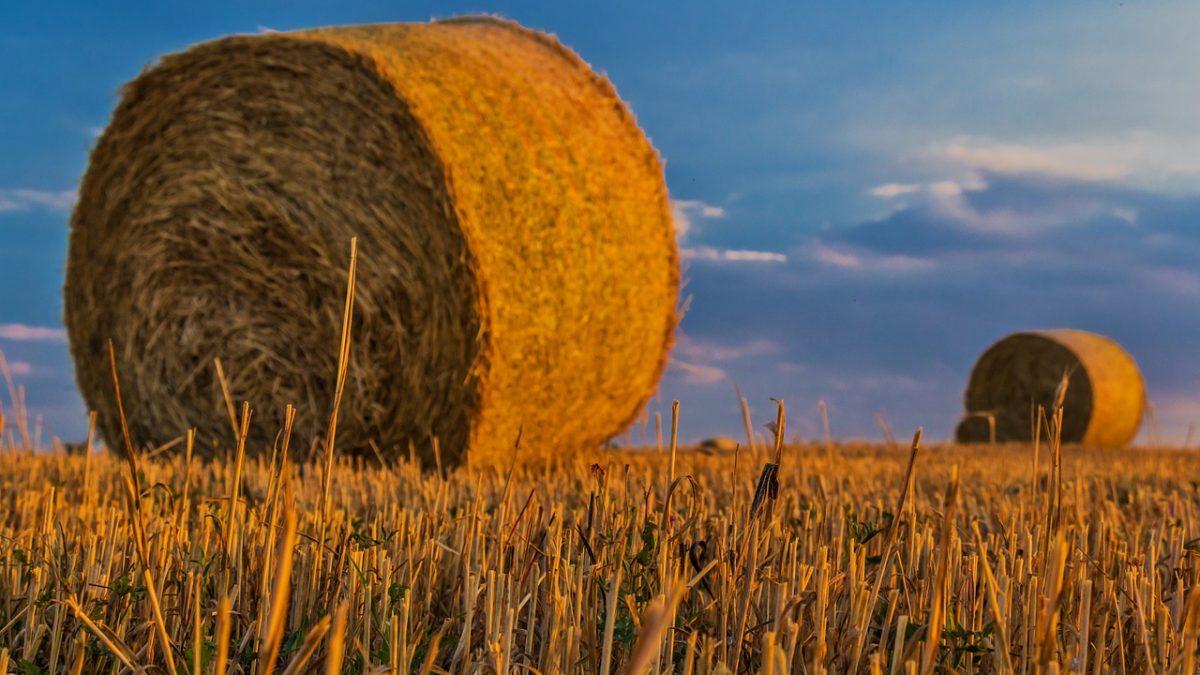 Program dla rolników