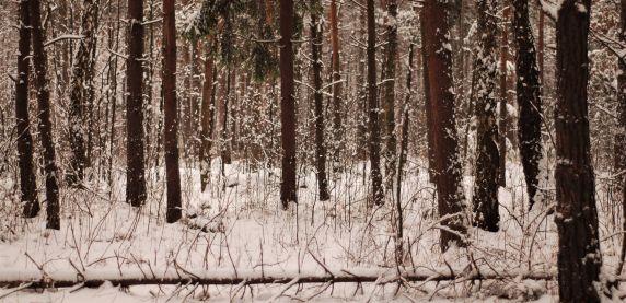 Zapraszamy na leśną wędrówkę