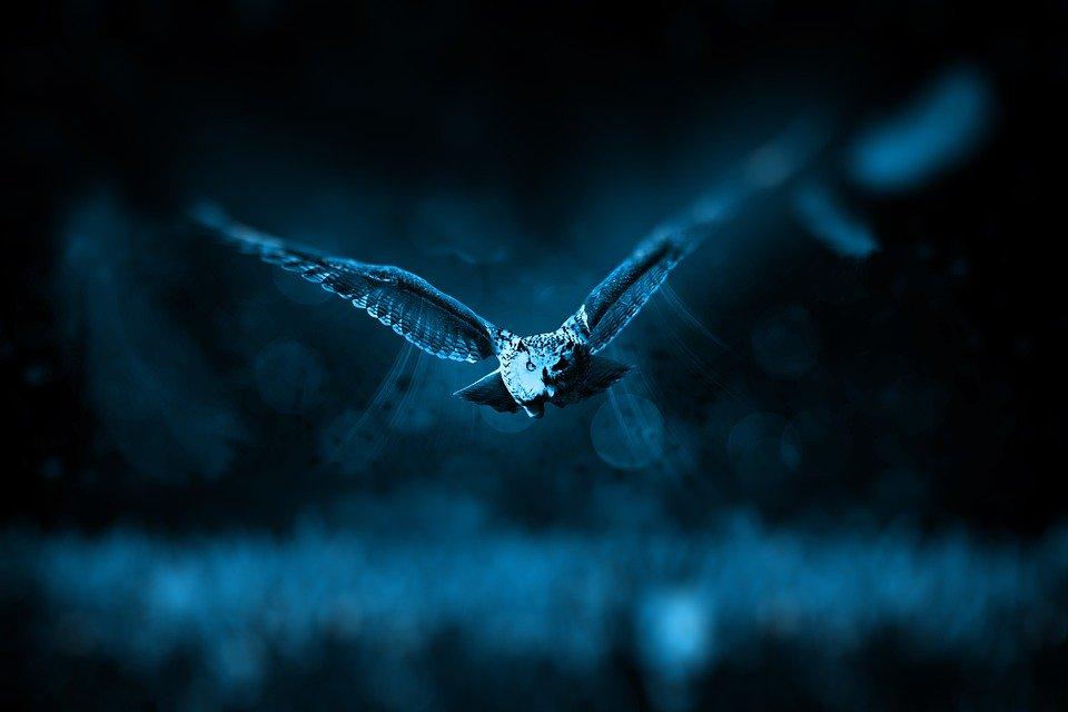 Księżogórska Sowia Noc