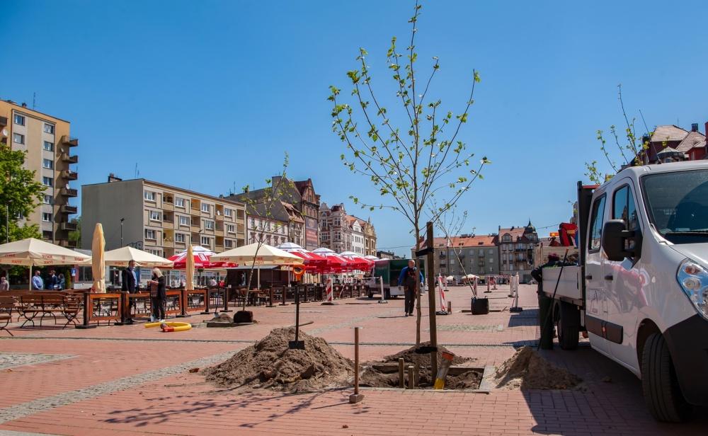 Rozpoczęła się rewitalizacja zieleni na bytomskim Rynku