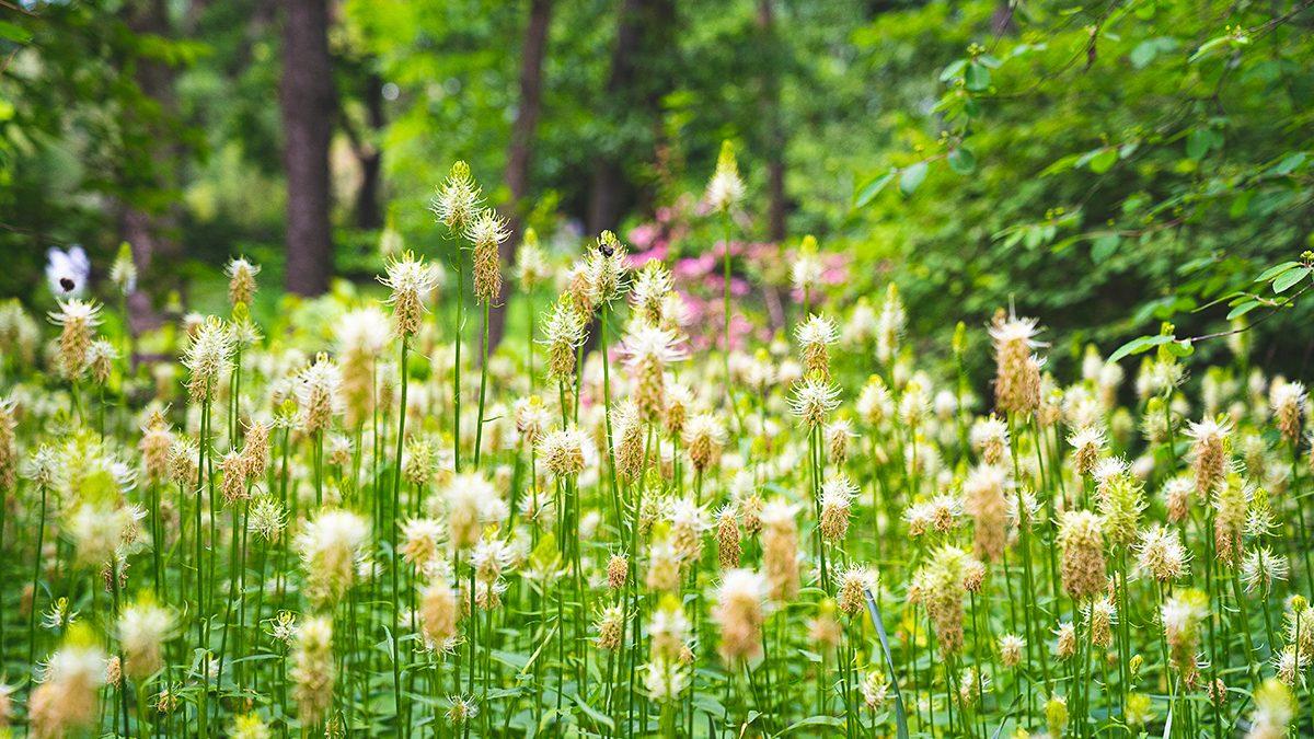 Fragment łąki w parku